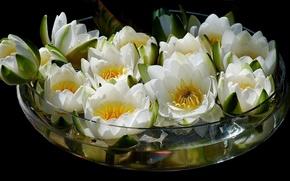Picture water, flowers, bouquet, Lotus, vase