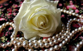 Picture flower, petals, fabric, pearl, white rose