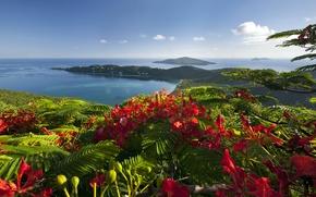 Picture sea, flowers, shore, Caribbean