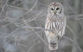 Wallpaper winter, autumn, grey, tree, owl, branch