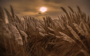 Picture night, nature, reed