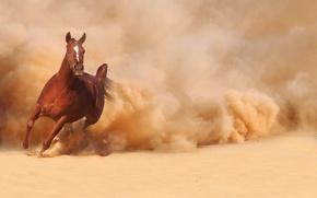Picture sand, horse, horse, dust, running, runs