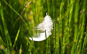 Picture greens, grass, macro, background, pen, Wallpaper, blur, wallpaper, widescreen, background, full screen, HD wallpapers, a ...