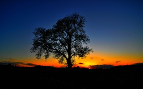 Picture the sky, sunset, tree, silhouette, glow