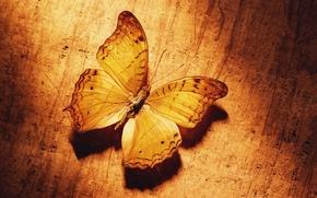Wallpaper Butterfly, yellow