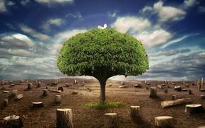 Wallpaper tree, the sky, stumps