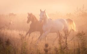 Picture fog, horses, horse