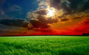 Picture field, the sky, grass, the sun, clouds, rays, sunset, clouds, green, ears