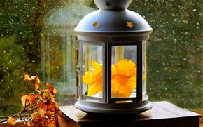 Picture autumn, flower, leaves, drops, spring, window, lantern, flower, autumn, leaves, window, Narcissus, drops, spring, paper, …