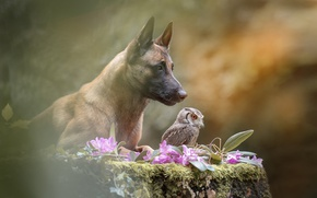 Picture flowers, nature, owl, bird, stump, dog, dog