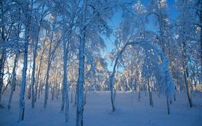 Picture winter, snow, trees, Sweden, Sweden