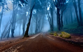 Picture road, forest, trees, nature, fog, slope, Portugal