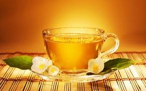 Picture flower, leaves, tea, Cup, saucer, Jasmine, tea