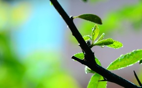 Picture leaves, water, macro, green, Rosa, background, widescreen, Wallpaper, branch, blur, leaf, wallpaper, leaf, widescreen, background, …