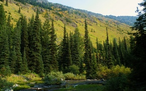 Picture forest, nature, photo, spruce, USA, Washington, Mt. Baker-Snoqualmie National