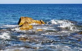 Picture algae, stone, wave, Sea