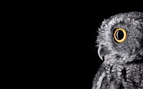 Wallpaper eyes, monoblock, BW, 28inch, newwallpapers, SurfaceStudio, owl, feathers, microsoft, windows