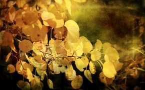Picture autumn, leaves, style, background