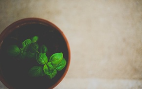 Picture leaves, plant, green, pot