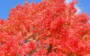 Picture tree, fall, foliage