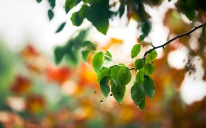 Picture drops, macro, foliage, branch, spring