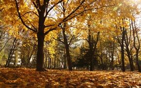 Picture autumn, Park, Pyatigorsk