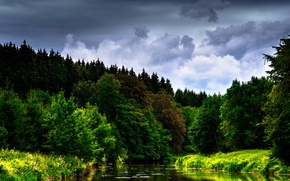 Wallpaper flowers, the sky, clouds, trees, river, forest