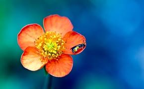 Wallpaper macro, paint, OSA, petals, macro, insect, flower, bokeh, colors, petals, 2560x1600, insect, flower, bokeh, wasp