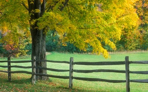 Wallpaper tree, the fence, Autumn