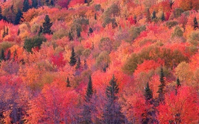 Picture autumn, forest, slope, the crimson