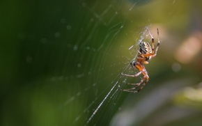 Picture macro, web, spider, insect
