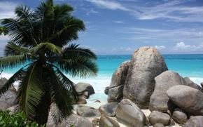 Picture sand, sea, beach, stones, palm trees, coast, beach, coast, bushes, sand, shrubs, stones, palm trees, ...