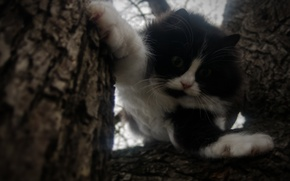 Picture the sky, look, branches, fright, situation, tree, claws, Cat