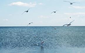 Picture sea, water, flight, seagulls, calm, blue, blue, cormorants