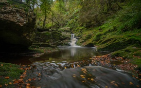 Picture autumn, forest, river, waterfall, Belgium, river, Belgium, Ardenne, Hoëgne River, Ardennes, The forest of Arden