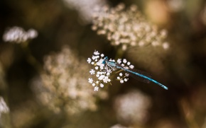 Picture dragonfly, macro, bokeh, dragonfly, flora, mmd, boke, helios
