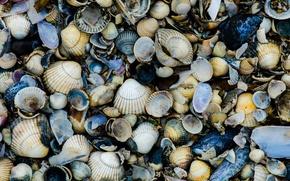 Picture sea, rocks, shells