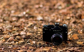 Picture leaves, background, camera, Zenit