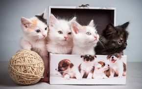 Picture tangle, kittens, box