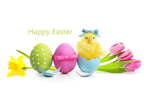 Picture flowers, spring, Easter, tulips, flowers, tulips, spring, Easter, eggs