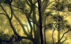 Picture forest, trees, fog, India, Karnataka
