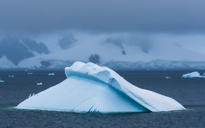 Picture misty, sea, mountain, snow, seagull, foggy, iceberg, ice floes