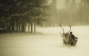 Picture winter, forest, snow, deer, guy, sleigh, snowfall, Finland