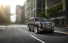 Picture car, the city, SUV, Cadillac Escalade