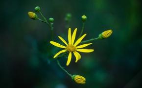 Picture flower, macro, flora, mmd, helios