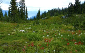 Picture forest, trees, flowers, mountains, stones, meadow, Canada, British Columbia, Canada