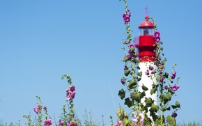 Picture the sky, flowers, lighthouse, mallow