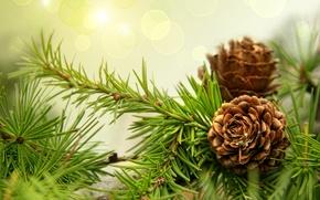 Wallpaper needles, spruce, branch, bumps
