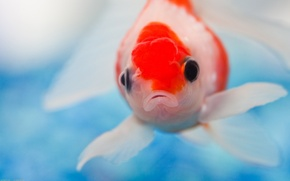 Picture eyes, fish, mouth, spot
