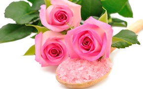 Picture flowers, pink roses, sea salt